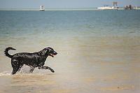 Bonita Beach Dog Park, Lovers Key State Park, Frot Myers, Florida, USA. Photo by Debi Pittman Wilkey