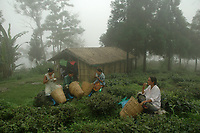 Feamale workers have their lunch at a tea garden in Darjeeling