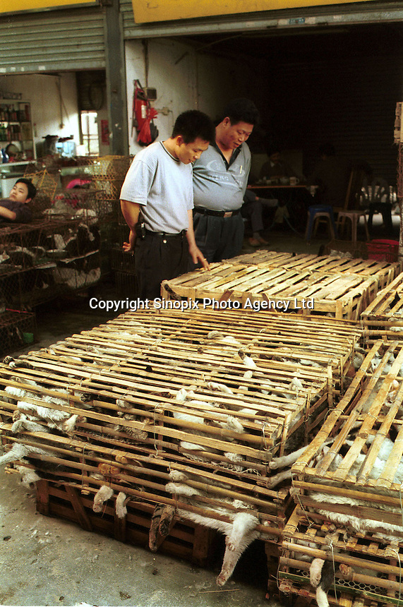 Cats are stored in cages after arriving in bamboo crates at a huge wild animal market that specializes in cat meat. Cats are commonly reared in the Chinese countryside specifically for sale to restaurants, where cat meat is now very popular...PHOTO BY SINOPIX