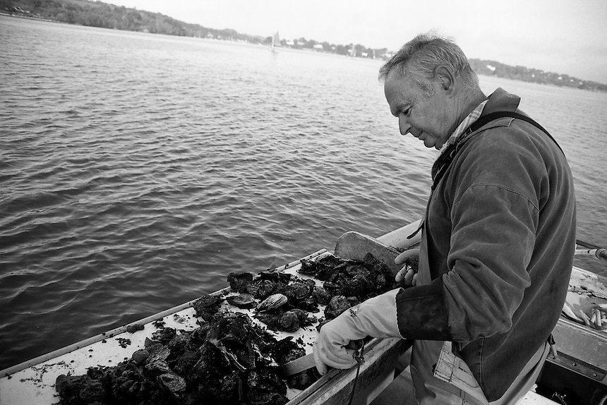 Oyster fisherman Barry Prynn is sorting the catch on his boat in the middle of Carrick Roads, Cornwall.