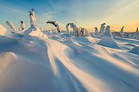 Wind blown snow patterns and snowloaded spruce trees, Interior, Alaska.