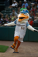 Myrtle Beach Pelicans mascot Splash Pelican (50) on the field before a game against the Carolina Mudcats at Ticketreturn.com Field at Pelicans Ballpark on June 4, 2015 in Myrtle Beach, South Carolina. Carolina defeated Myrtle Beach 3-2. (Robert Gurganus/Four Seam Images)