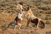 Cowboys and cowgirls living the western lifestyle.