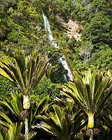Nikau Palms of coastal forest with waterfall in Punakaiki, Paparoa National Park, Buller Region, West Coast, New Zealand, NZ