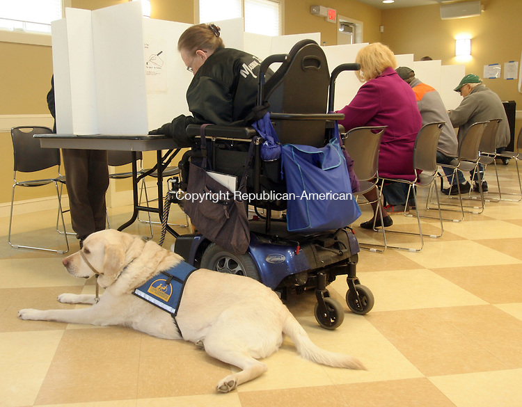 "WOODBURY, CT-05 November 2013-110513TK14-  Jo-Anne Plunske prepares her voting choices as her service dog ""Theo"" patiently awaits her next command Tuesday at Woodbury Town Hall.  Tom Kabelka Republican-American"