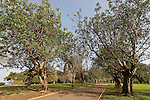 Israel, Mount Carmel. Ramat Hanadiv. The Memorial Gardens for Baron Edmond (Binyamin) de Rothschild and his wife, Baroness Adelheid (Ada).