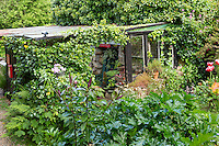 France, Manche (50), Saint-Germain-des-Vaux, Jardin en Hommage à Jacques Prévert, la cabane véranda de l'accueil