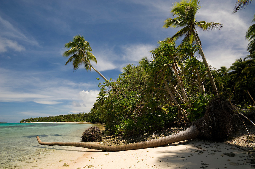 Fallen palms on the lagoon beach mark changing tides and sea level rise on the low-lying atolls of the Marshall Islands.