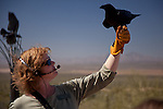 Visitors watch a demonstration of Ravens in flight at the Arizona Sonoran Desert Museum in Tucson, AZ, USA