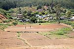 Intensive subsistence farming near Nuwara Eliya, Central Province, Sri Lanka, Asia