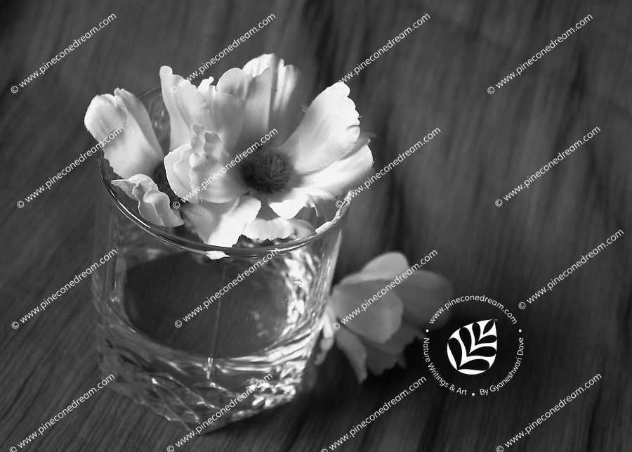 """Flowers arranged in water glass black and white fine art stock image.<br /> <br /> To view the same image in color visit the gallery-""""Food & Other Still Life""""."""