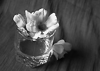 Flowers arranged in water glass black and white fine art stock image.<br />