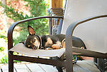 Carlos sleeping on patio chair