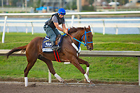 HALLANDALE BEACH, FL-JAN 26: Gunnevera works for the Pegasus World Cup Invitational at Gulfstream Park Race Track on January 26, 2018 in Hallandale Beach, Florida.(Photo by Kaz Ishida/Eclipse Sportswire/Getty Images)