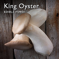 Food Pictures of Fresh King Oyster Mushrooms. Food Photos, Images.