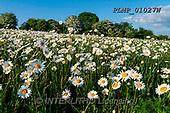 Marek, LANDSCAPES, LANDSCHAFTEN, PAISAJES, photos+++++,PLMP01027W,#L#, EVERYDAY