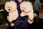 Bichon Frises Crufts Dog Show 1990s National Exhibition Centre Birmingham UK. Competitive hobby woman pet owner  1991 <br />