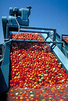 Tomatoes being washed at processing plant. California.
