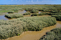 Saltmarsh, Pagham Harbour