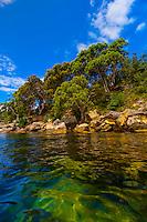 Near Store Beach, Sydney Harbour National Park  near Manly, Sydney, New South Wales, Australia
