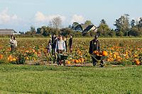 People with wheelbarrows full of pumpkins at Westham Island Herb Farm, Delta, British Columbia, Canada