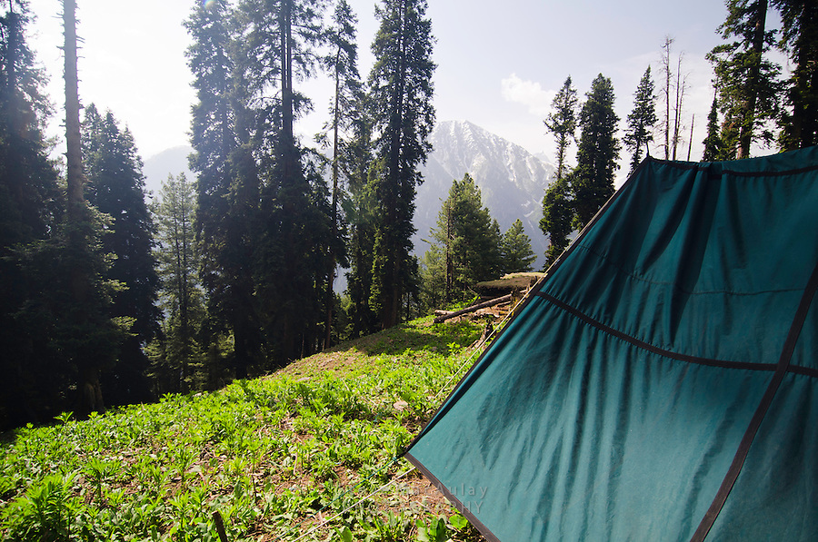 View of trekking tent and forest, Western Himalayan Mountains, Kashmir, India..