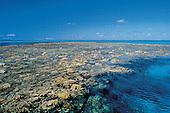 Massif de corail sur la grande barrière de corail