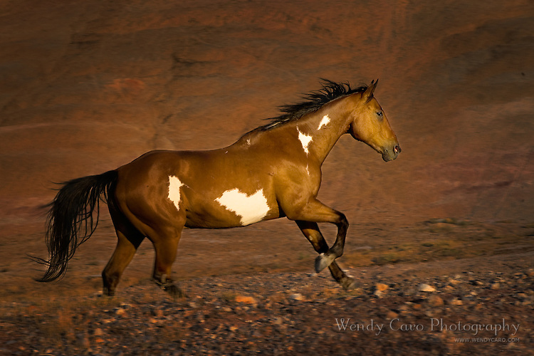 Painted pony galloping in front of Red Rocks, Big Horn Mountains, Wyoming.