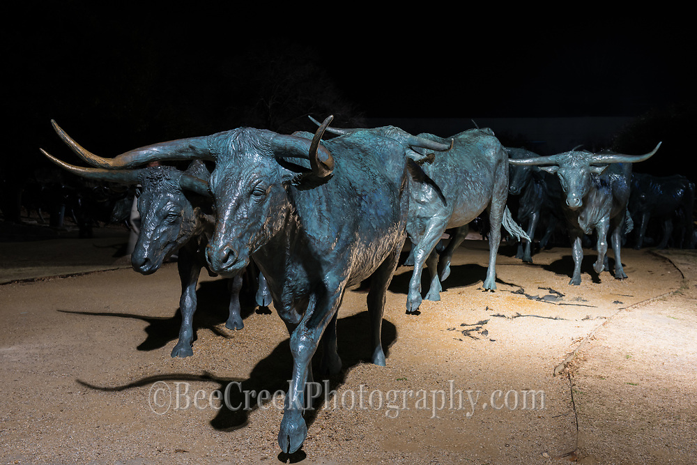 Pioneer Plaza in downtown Dallas display of larger than normal sized bronze statues of longhorn cattle as they might appear as they were driven along the shawnee trail in the 19th century.  There are 49 Texas longhorns and 3 riders at this heavly visited  park  in the city of Dallas.
