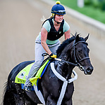 LOUISVILLE, KENTUCKY - MAY 01: Win Win Win, trained by Michael Trombetta, exercises in preparation for the Kentucky Derby at Churchill Downs in Louisville, Kentucky on May 1, 2019. John Voorhees/Eclipse Sportswire/CSM