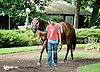 Boom Boom Frankie at Delaware Park on 8/20/14