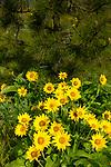 Mosier Plateau Wildflowers