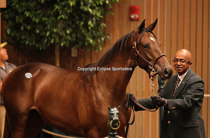 Hip #16 Empire Maker - Rutherienne at the Keeneland September Yearling Sale.  September 10, 2012.