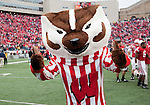 November 14, 2009: Wisconsin Badgers mascot Bucky Badger celebrates during an NCAA football game against the Michigan Wolverines at Camp Randall Stadium on November 14, 2009 in Madison, Wisconsin. The Badgers won 45-24. (Photo by David Stluka)