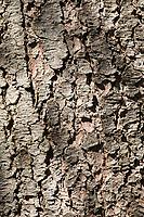Gewöhnliche Fichte, Fichte, Rot-Fichte, Rotfichte, Rinde, Borke, Stamm, Baumstamm, Picea abies, Common Spruce, Spruce, Norway spruce, bark, rind, trunk, stem, L'Épicéa, Épicéa commun