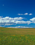 Wallowa County, OR  <br /> Cumulus clouds building over an open native bunchgrass prairie on Monument Ridge