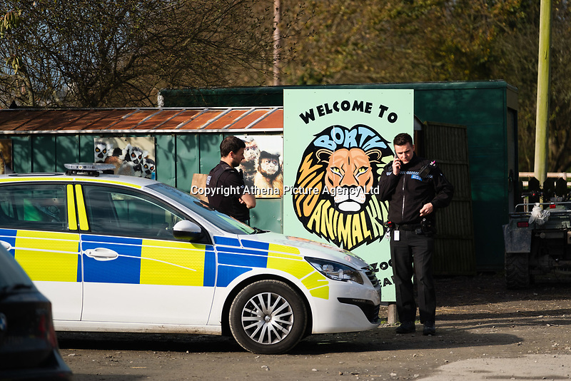 Pictured: Police officers at the entrance of the Borth Wild Animal Kingdom (formerly Borth Animalarium) , Ceredigion Wales UK. Monday 30 October 2017<br /> Re: The search continues for Lillith, a juvenile European Lynx, (latin name Lynx Lynx) which escaped from its enclosure at Both Wild Animal Kingdom.  A police helicopter with thermal imaging cameras spotted the animal  in undergrowth near the zoo in the  3early evening yesterday, raising hopes that the creature has gone to ground close to its home