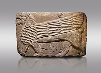 Pictures &amp; images of Phrygian relief sculpted orthostat stone panel Andesite, Atateirk Orman ciftligi, Ankara, 12OO-700 B.C. Anatolian Civilisations Museum, Ankara, Turkey.<br /> <br /> Winged griffin with a bird's head and a lion's body. There is a bird's head at the end of its tail. The chest was processed like fish scales. Its wing extends along the body. Muscles in its legs are schematic. <br /> <br /> Against a gray background.