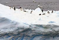 Antarctica Antartica