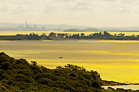 Looking from Waiheke Island across the Hauraki Gulf to the skyline of Auckland, New Zealand