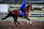 October 29, 2019 : Breeders' Cup Turf entrant Old Persian, trained by Charlie Appleby, exercises in preparation for the Breeders' Cup World Championships at Santa Anita Park in Arcadia, California on October 29, 2019. John Voorhees/Eclipse Sportswire/Breeders' Cup/CSM
