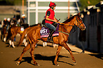 OCT 29: Breeders' Cup Juvenile Fillies Turf entrant Albigna, trained by Mrs. John Harrington,  at Santa Anita Park in Arcadia, California on Oct 29, 2019. Evers/Eclipse Sportswire/Breeders' Cup