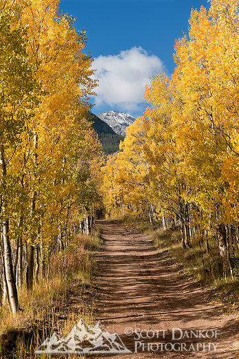 Aspen on Hermit Pass Road, Colorado.