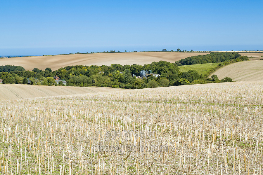 Oil seed rape field - Lincolnshire, August