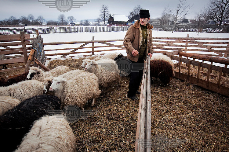 A sheep farmer tends to his flock following a recent snow fall.