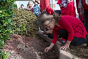Bellview Kids Plant Tulips - October 30, 2017