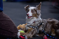 Fetch 'n Fly Flyball Tournament March 29, 30 2014