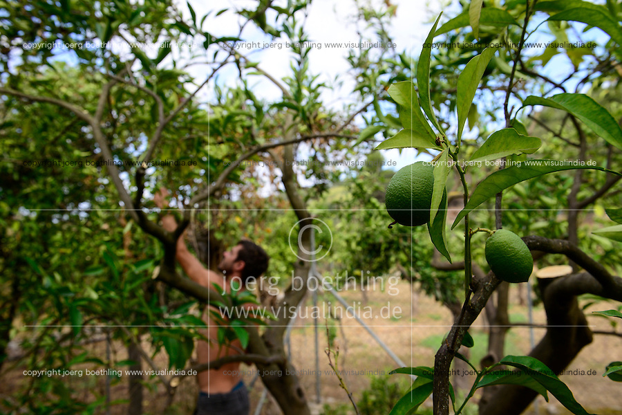 SPAIN Mallorca, Soller, farming in the mountains, orange trees / SPANIEN Mallorca, Soller, Landwirtschaft in den Bergen, Orangen, Baumschnitt