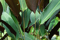 Close up of dense palm leaves.