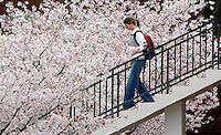 Kelly Ellis, a Clemson University freshman from Spartanburg, descends the staircase outside of the Robert Muldrow Cooper Library near a row of blooming cherry trees Monday. Forecasters are calling for warmer, more Sping-like weather, to return to the Upstate beginning today with chances of rain throughout the week.